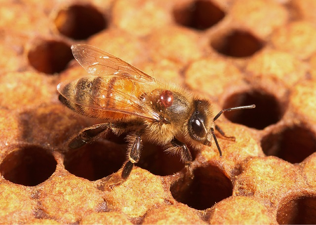 Familii de albine de vanzare la Apis Donau!